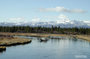 The Madison River near West Yellowstone