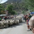 Sheep Run 3