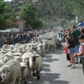 Sheep Run 4