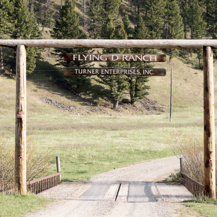 Flying D Ranch: Bison Viewing Area