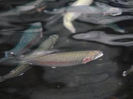 Ennis National Fish Hatchery Ennis Montana