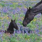 Pryor Mountain National Wild Horse Range