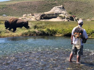 John Long Fly Fishing with Bison on the Yellowstone River