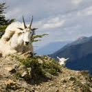 Goat Lick Overlook