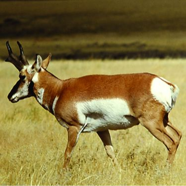 Halfbreed National Wildlife Refuge
